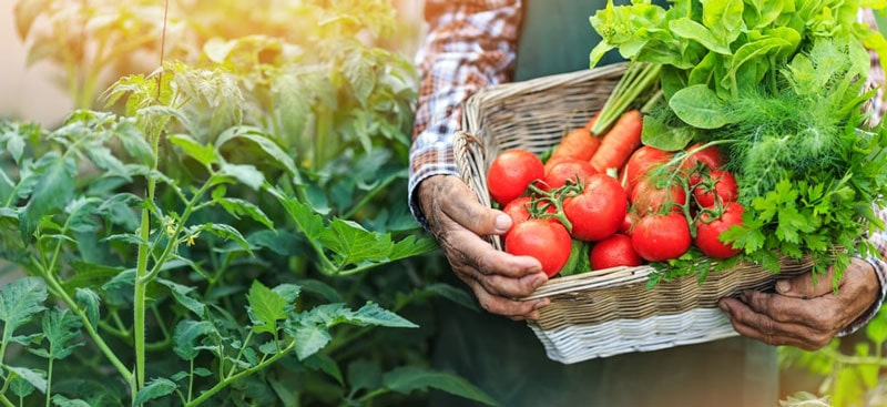 Gemüsesäfte